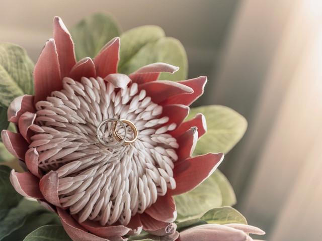 Protea: a flor preferida das noivas modernas