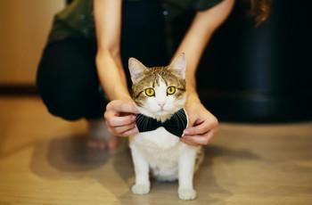 Pedidos de casamento com ajuda do animal de estimação: as ideias mais adoráveis!