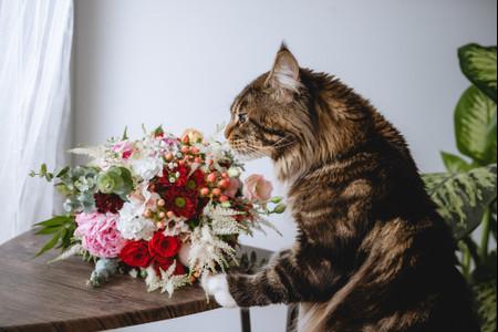 10 flores que atraem a sorte no casamento