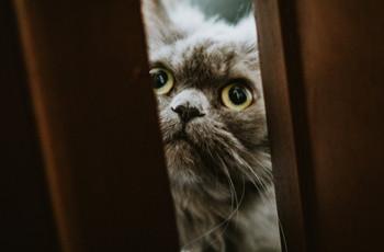 Como incluir gatos no teu casamento?