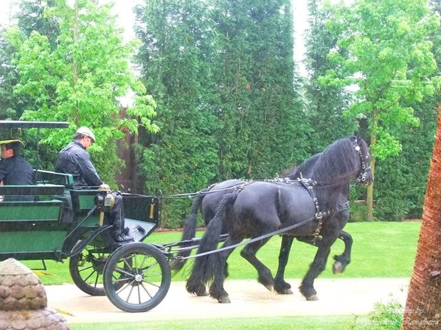 O casamento de Pedro e Diana em Estarreja, Estarreja 3
