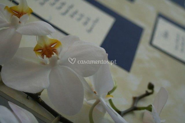 Diversos tipos de flores