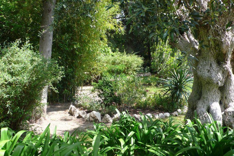 Jardim oliveiras centenarias
