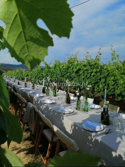 Jantar na vinha
