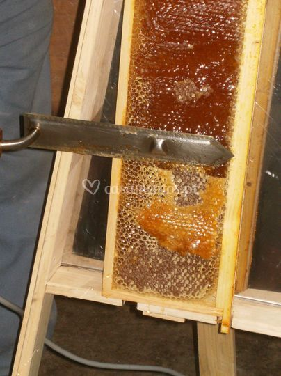 Velas de cera de abelha