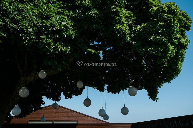 Iluminação árvore centenária