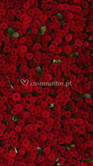 Parede Rosas vermelhas