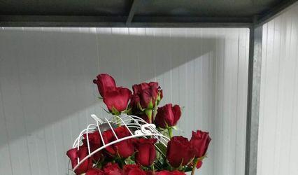RR Florista 2