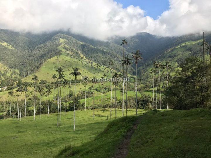 Cocora - Colômbia