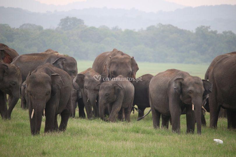 Kaudulla - Sri Lanka