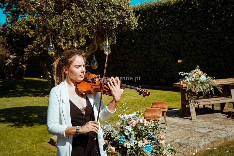 Violinista - bloom eventos