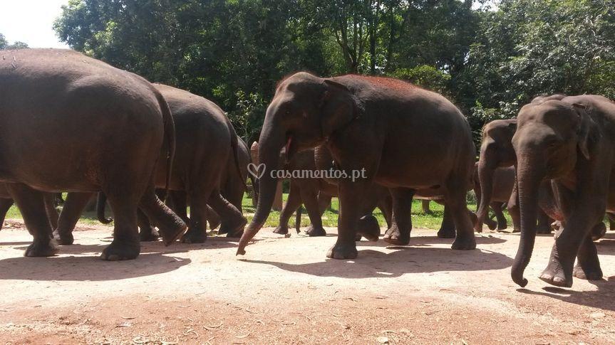 Orfanato elefantes - sri lanka