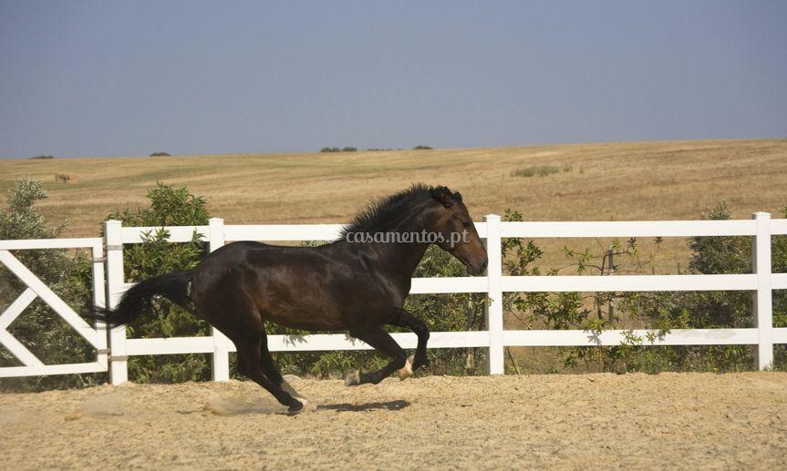 Equestres