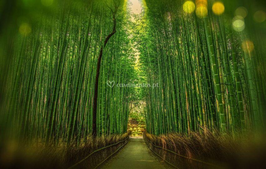 A floresta de bambu de Arashiy