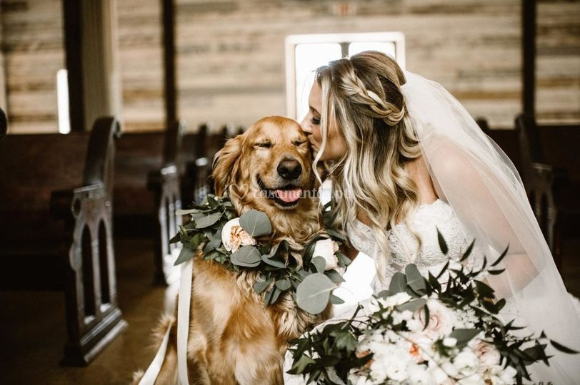 Animalitos - Wedding Dog Services