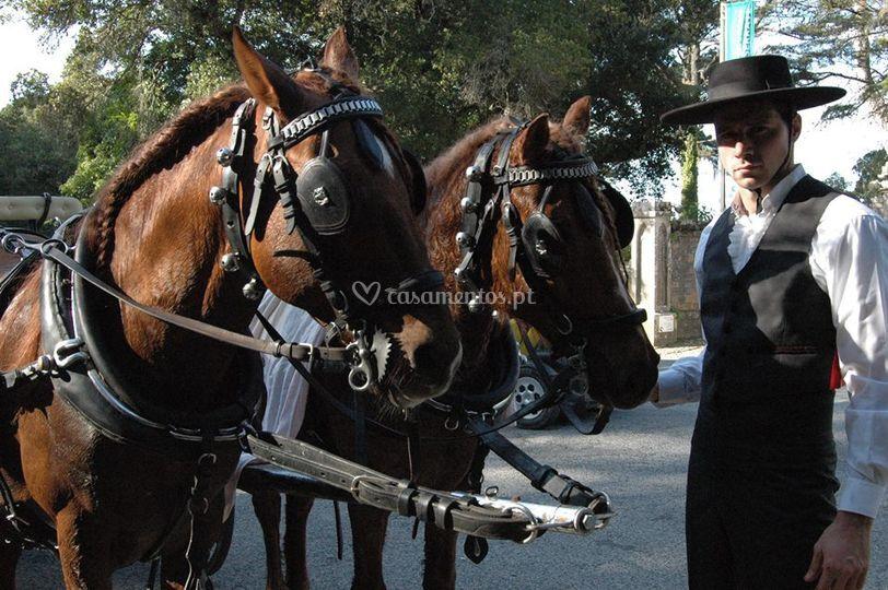 Cavalos castanhos