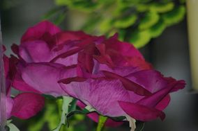 Florista Violeta