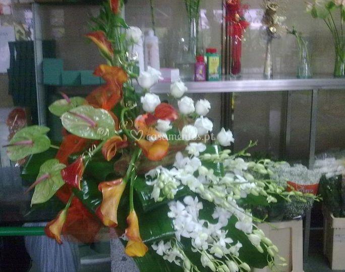 Florista Paciflor