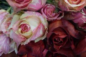 Flori Flor