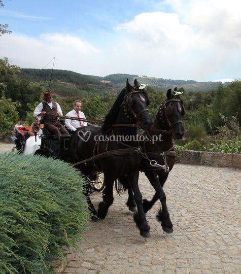 Cavalos Frísios