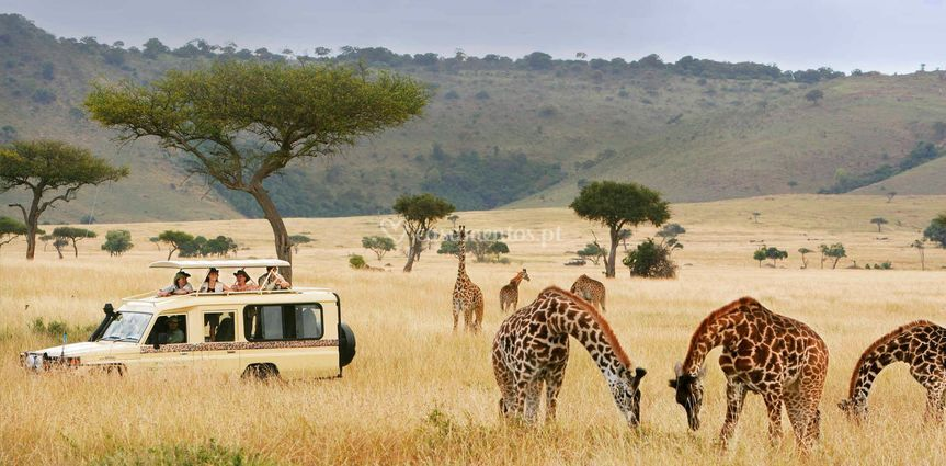 Safari - Tanzânia