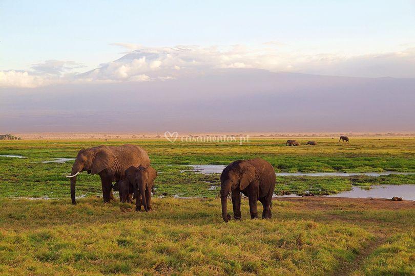 Lua-de-mel safaris