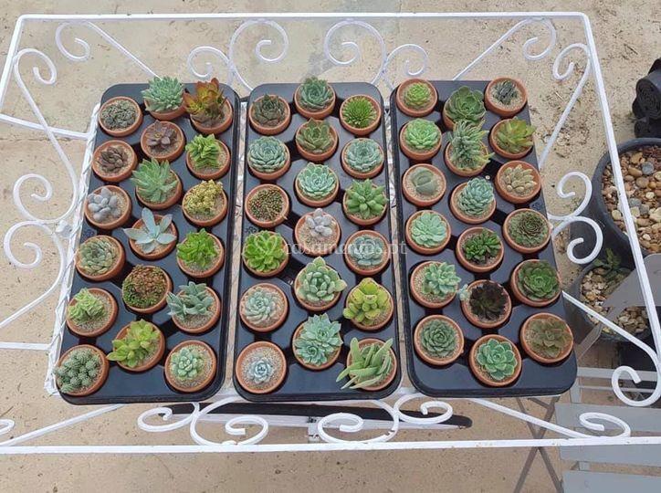 CactiJardins