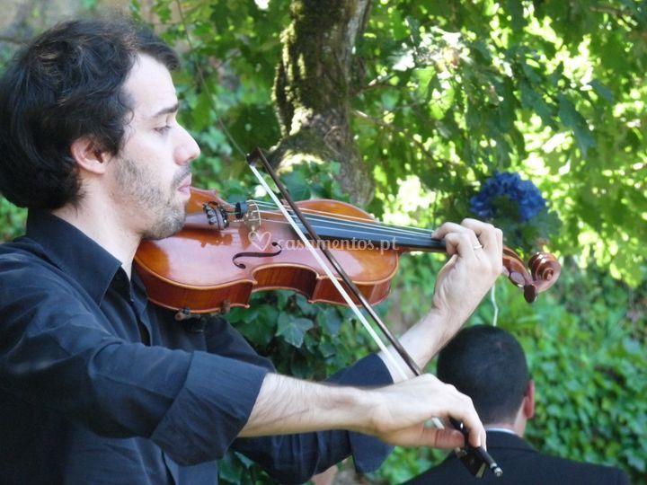 Violinista - cerimónia civil