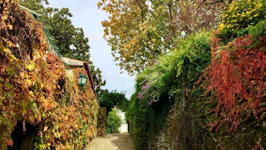 Outono casa de montezelo