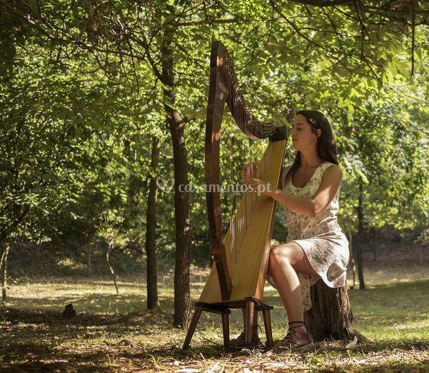 A harpa ao som da natureza