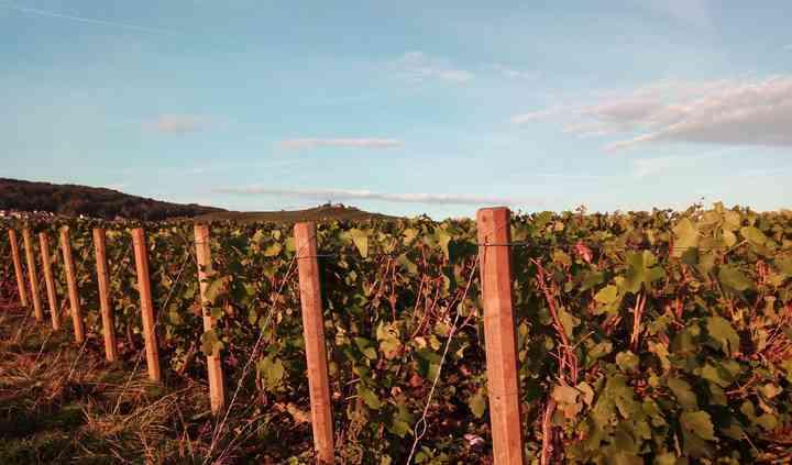 As nossa vinhas