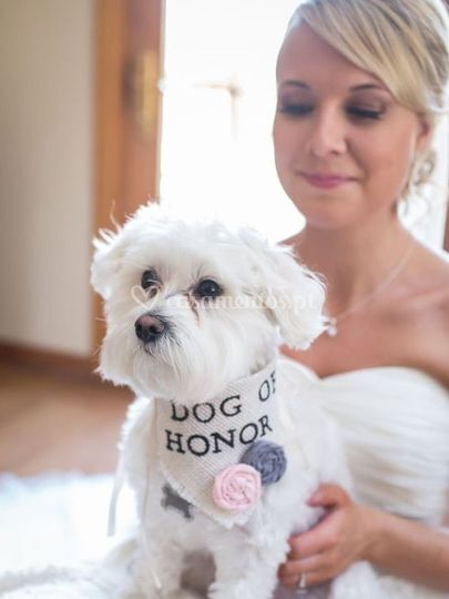 Pet of Honor