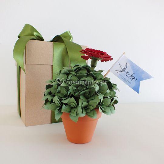 Plantas de papel.