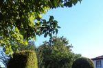 Jardins buxo