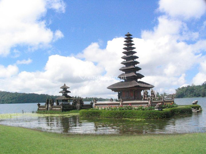Balii
