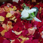 La Vie En Rose 7