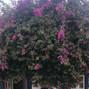 Quinta da Bichinha 9