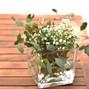 Flores do Bruno 11