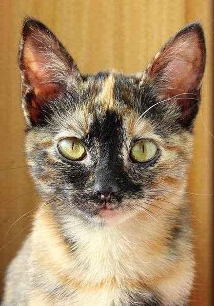 A minha gata :)