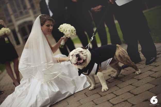 cao casamento