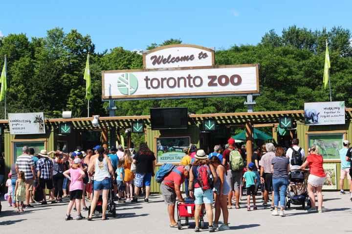 Descobre as atrações turísticas para destino de lua de mel em Toronto 🇨🇦 - 8
