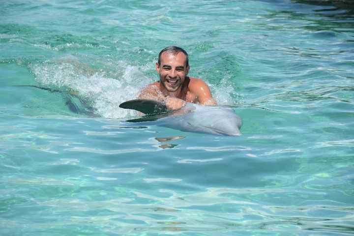 Golfinhos noivo