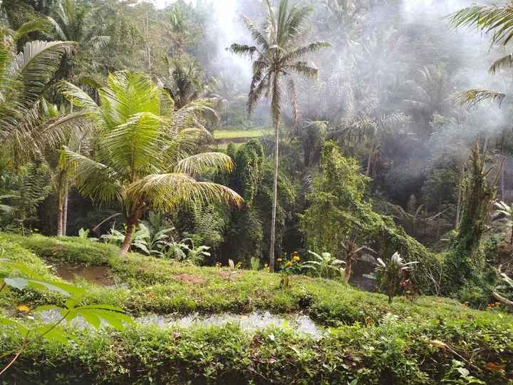 A tropicalidade das florestas