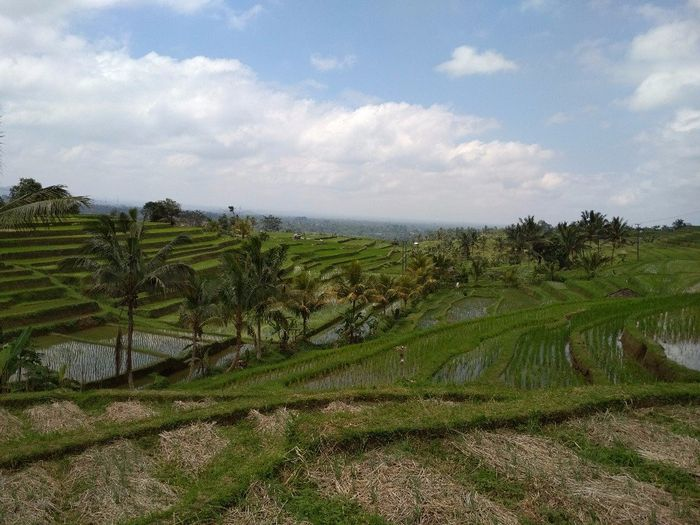 a minha fantástica Lua de Mel - Bali 4