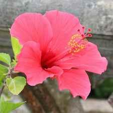 Flor De Março