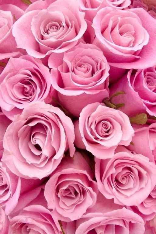 Acho rosas lindas, para mim são simbolo de fé , força e coragem por isso logo as tinha de ter no meu