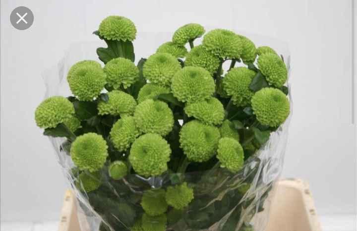Flores que substituam Manjericos - 1