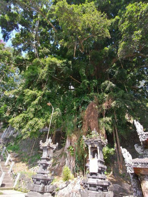 a nossa Lua de Mel - Bali e Gili - 8