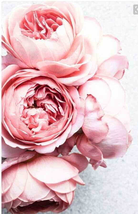 Tipo de flores  escolhido - 4