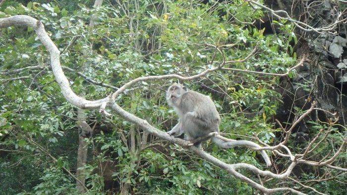 Um macaco - o resto está em video